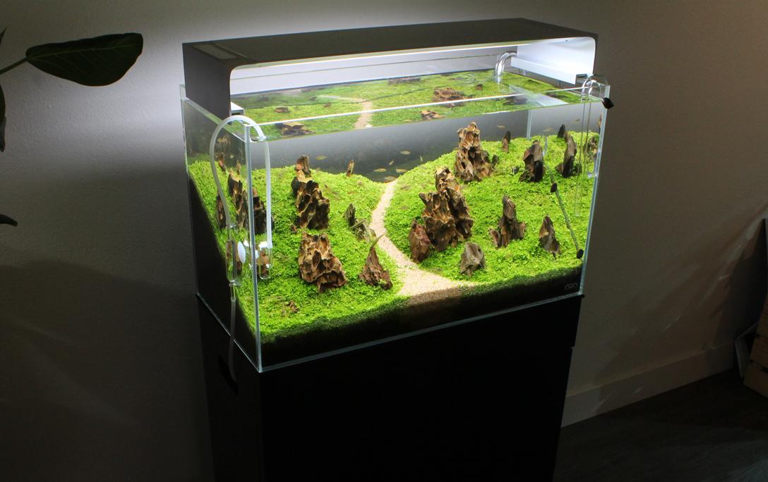 Aquaria Cabinet